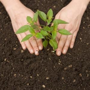"""Résultat de recherche d'images pour """"planter arbre"""""""
