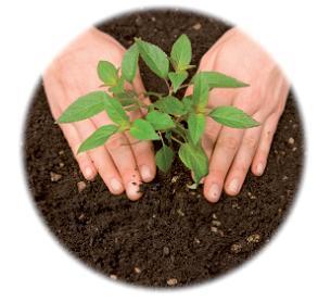 mains-plantes