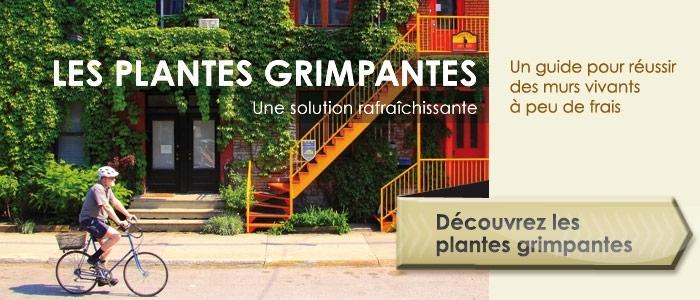decouvrez-plantes-grimpantes